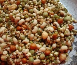 Sprouts Recipe
